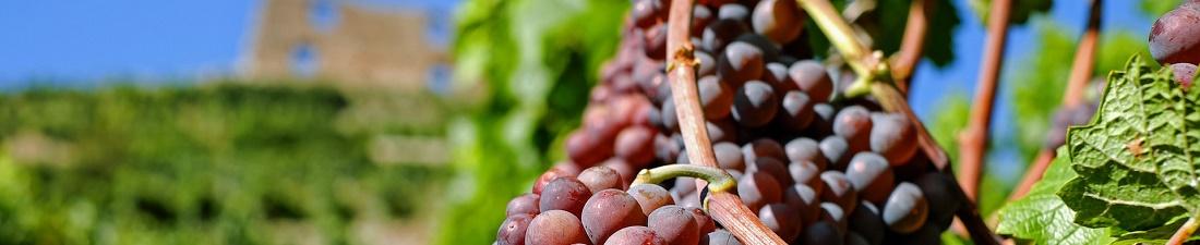 Corvina Wijn