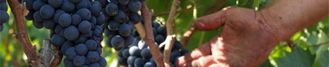 Negroamaro Wijn