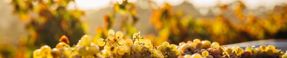 Pinot Grigio Wijn