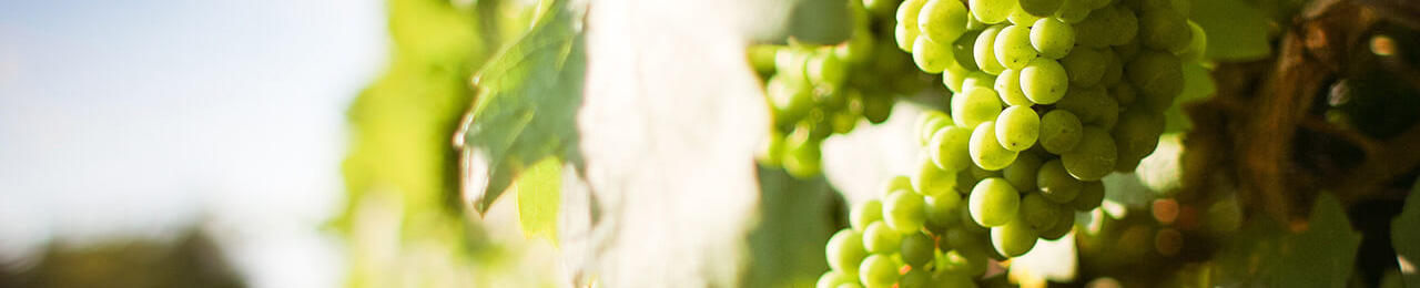Fris & fruitig wit - Wijn